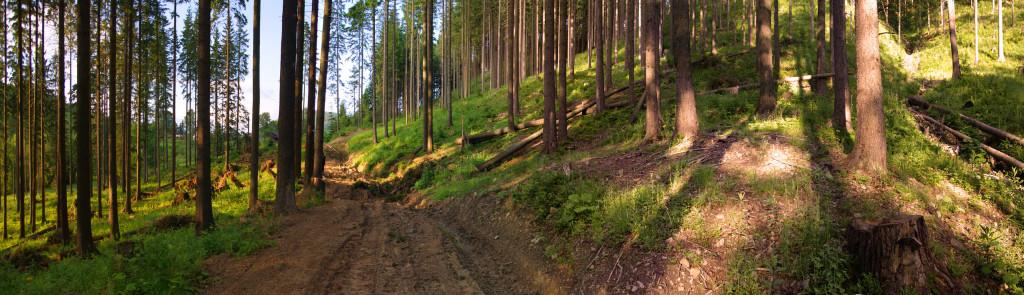 Góry, Mountains, Las, Forest, Wood, Polska