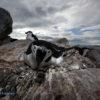 Krzysztof KONIECZNY: Pingwinie rozmowy