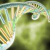 """Sylwia BORSKA: """"Najnowsze osiągnięcia inżynierii genetycznej w walce z malarią."""""""