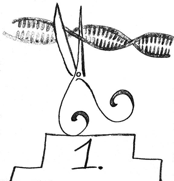 Rys 3 CRISPR_miejsce 1