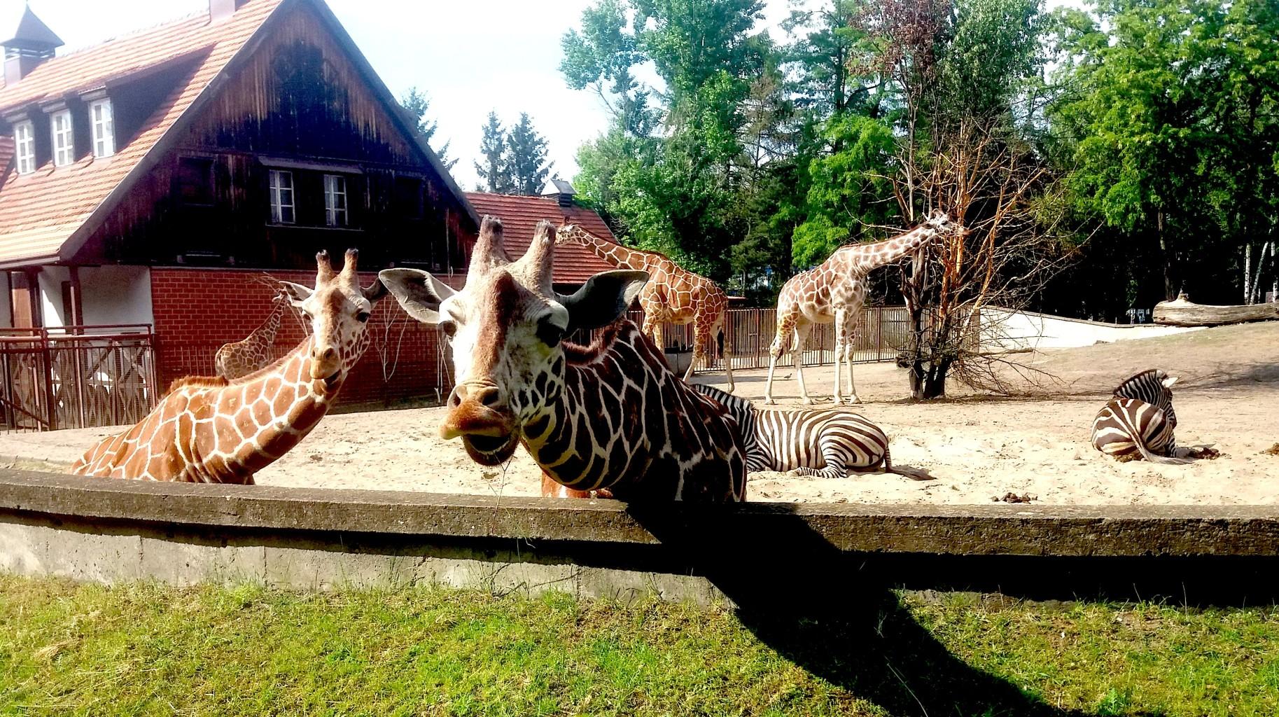 10_Zoo (1)