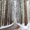 Joanna LEMAŃSKA: Cool Pics (145). Najpiękniejsze zimy są w Polsce!