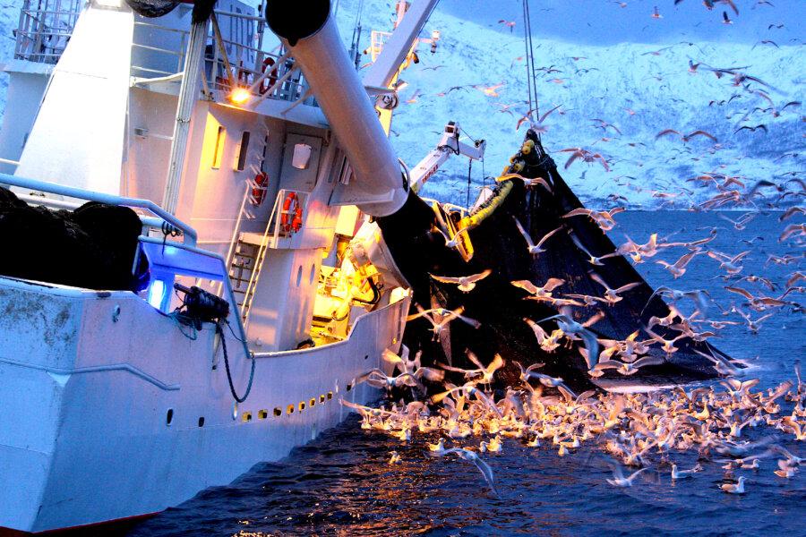 Prof. Aleksander SURDEJ: Dlaczego świeże ryby stają się drogą rzadkością?