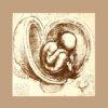 Anna MAKUCH: Bajki dziwaka z Vinci